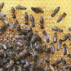 Rodinná včelí farma Jiří a Božena Brejchovi