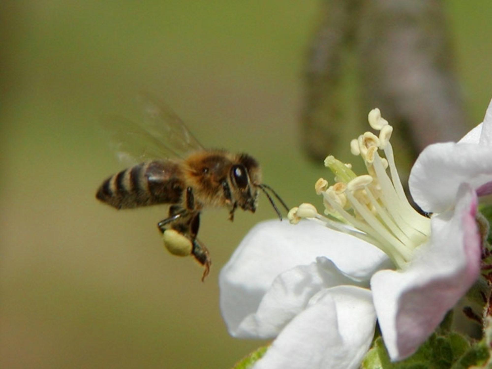 Rodinná včelí farma Jiří a Alena Brejchovi